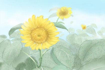 有创意的小花园名字 唯美的花店名大全