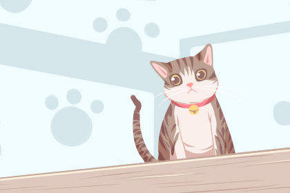 梦见一只猫在地下被打是什么意思