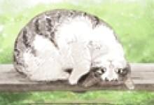 梦见猫咬人是什么意思