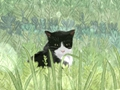 女人梦见被猫追着咬意味着什么