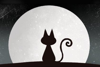 梦见猫捉老鼠什么意思