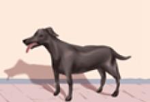 梦见两只狗在配种是怎么回事