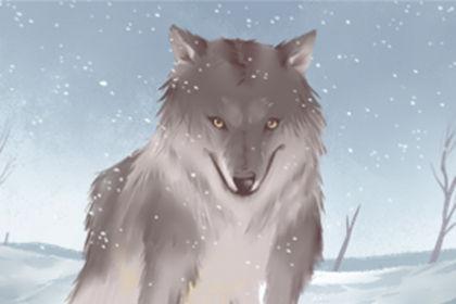 梦见狼并感到害怕是什么意思