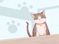 女人夢見被貓舔是什么預兆被