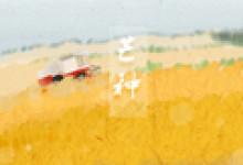 今日芒種 梔子花開 節氣暖心小祝福
