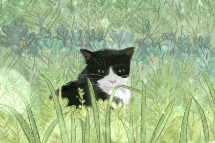 男猫咪高贵洋气的名字大全 吉利又好听