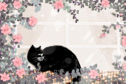 给猫取名字霸气又拽 独一无二的猫咪名字