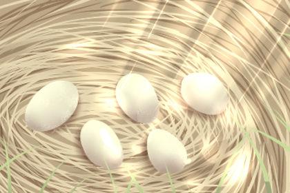 梦见鸟从蛋中孵化是什么意思