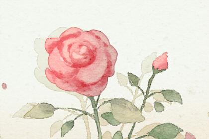 梦见红花开得漂亮有哪些标志