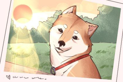 狗狗起什么名字旺主人 叫什么名字能旺家