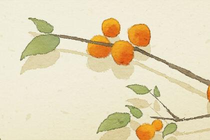 梦见荔枝树意味着什么