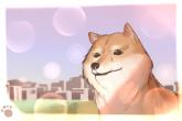 小狗狗的名字大全可爱 白色女狗取名推荐