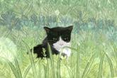 给猫起个文艺点的名字 有纪念意义