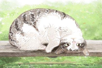 母猫温柔的名字 寓意好的宠物猫名字大全