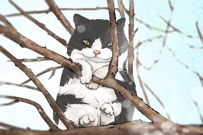 母猫咪的名字独特一点 时髦好听的猫名字
