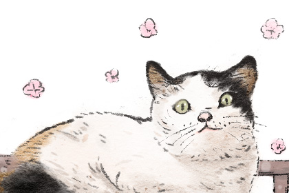 公猫咪名字奇葩搞笑 最新宠物名字推荐