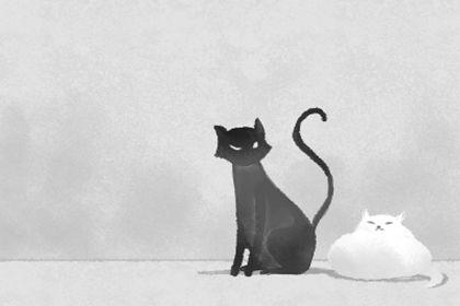 猫咪取名禁忌词汇 有哪些注意事项