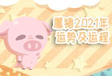 属猪2021年运势及运程