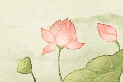 十大诅咒之花的花语 寓意 含义