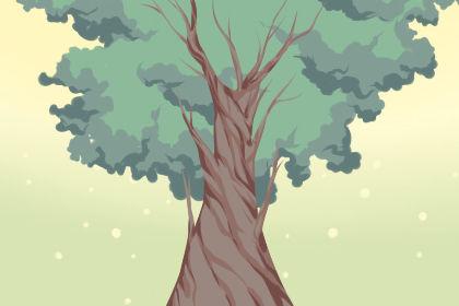 女人梦见屋里有树是什么预兆