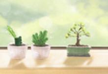 选一棵树 测测你未来三年的运势走势