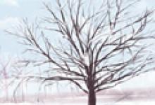 2020年冬至吃娇耳是什么 天冷需要注意什么