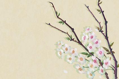 白花(无字)