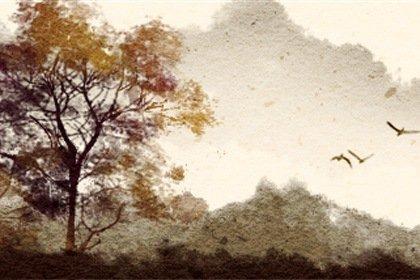 风景51 (2)