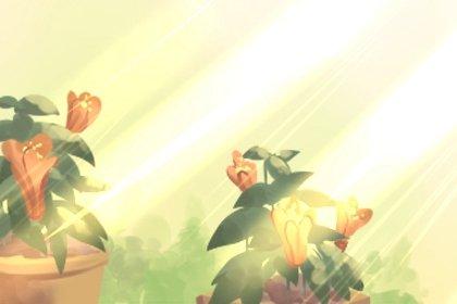 家里最旺财的十种花