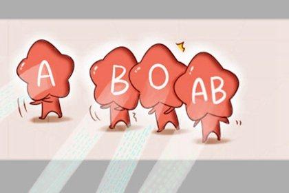 o型血的最佳配偶血型