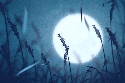 平安夜哪一天 平安夜送什么花比较好