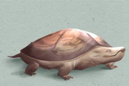 乌龟(420x280)